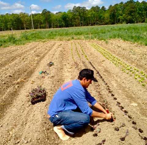 Bruce Working at New Earth Farm