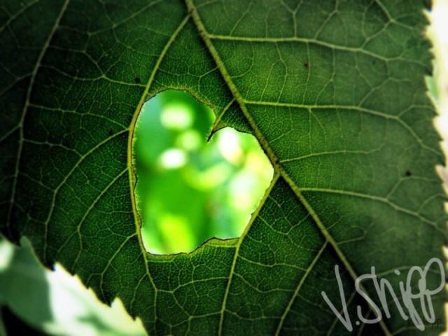 Virginia Shipp - Gloria Photography