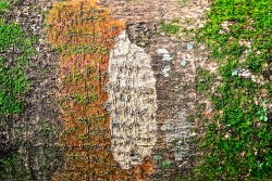 Green-White-Orange Bark | Abbie Korman