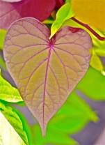 Heart Leaf | Abbie Korman