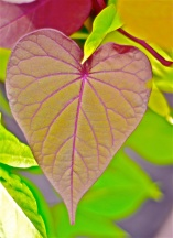 Heart Leaf | Abbie Korman