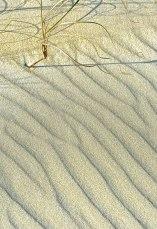 Sand Shadows | Abbie Korman